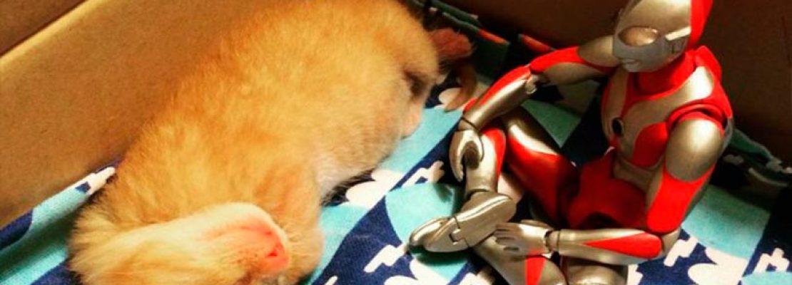 Un Japones Adopto Gato Recien Nacido